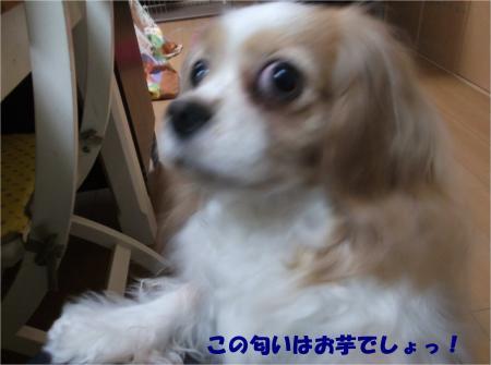 03_convert_20160316192348.jpg