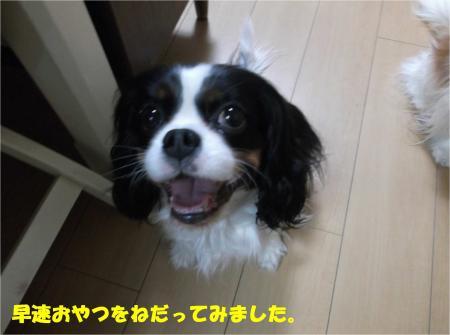 05_convert_20160218183359.jpg