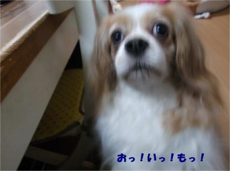 05_convert_20160316192406.jpg