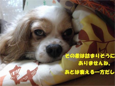 06_convert_20160307192851.jpg