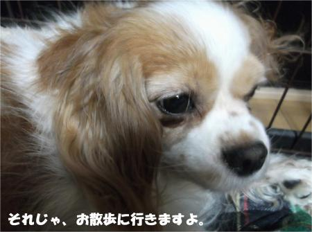 07_convert_20160404182357.jpg