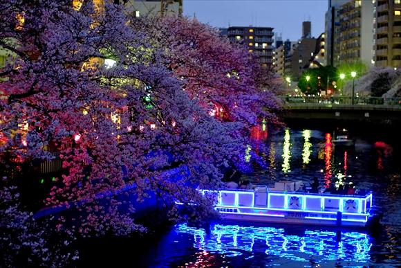 夜桜-4_R