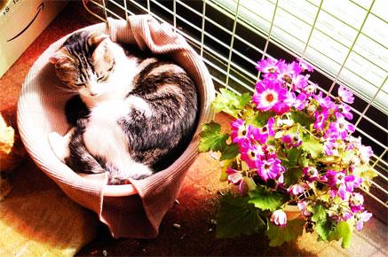 洗面器ネコとお花