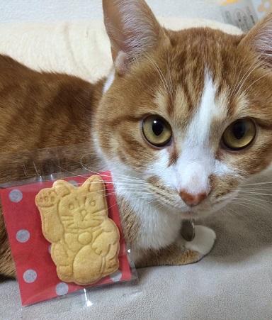 ねこと招き猫クッキー
