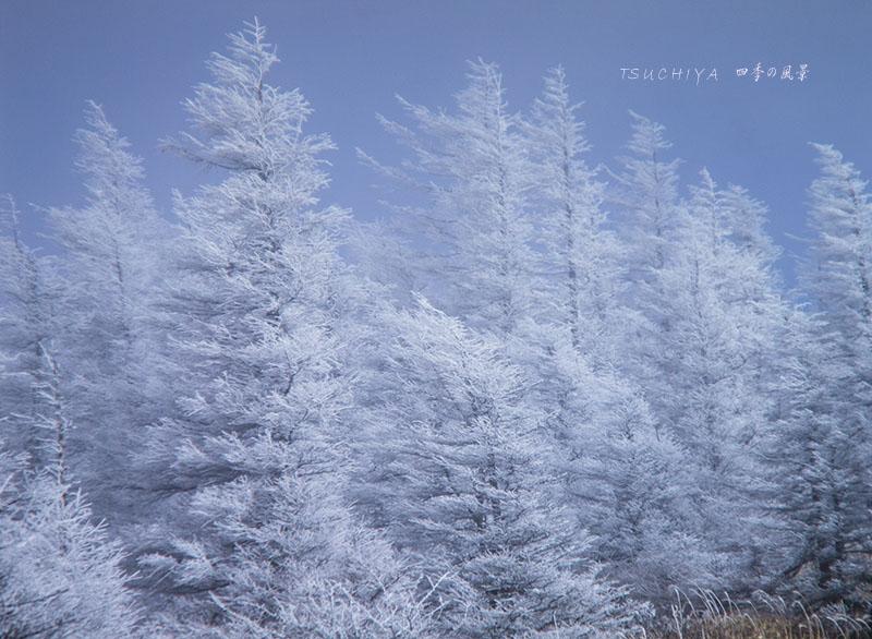 鉢伏山 3