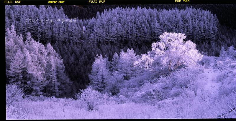 鉢伏山  6×12 800dpi 2