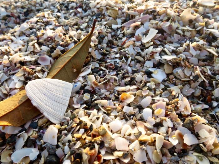 貝殻いっぱい