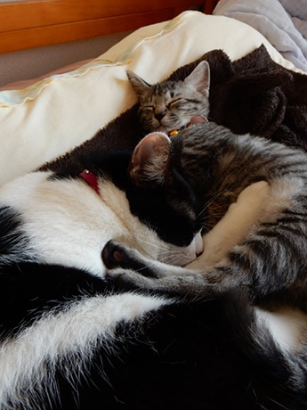 ほほえましい猫団子