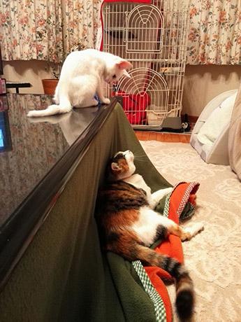 先住猫のゆずさんとご対面