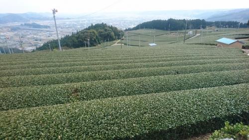 2016_0323ユーコープセレクションお茶学習 (46)
