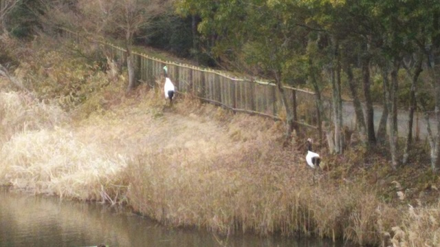 160210 岡山県自然保護センター⑤ ブログ用
