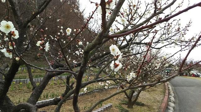 160224 神崎梅園① ブログ用