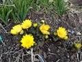 春もそこまできていますね