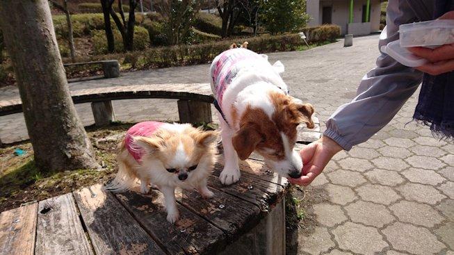 2016長岡公園0152