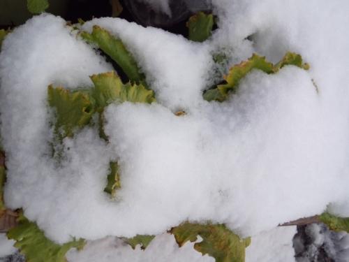 2016-1-20 雪の風景3