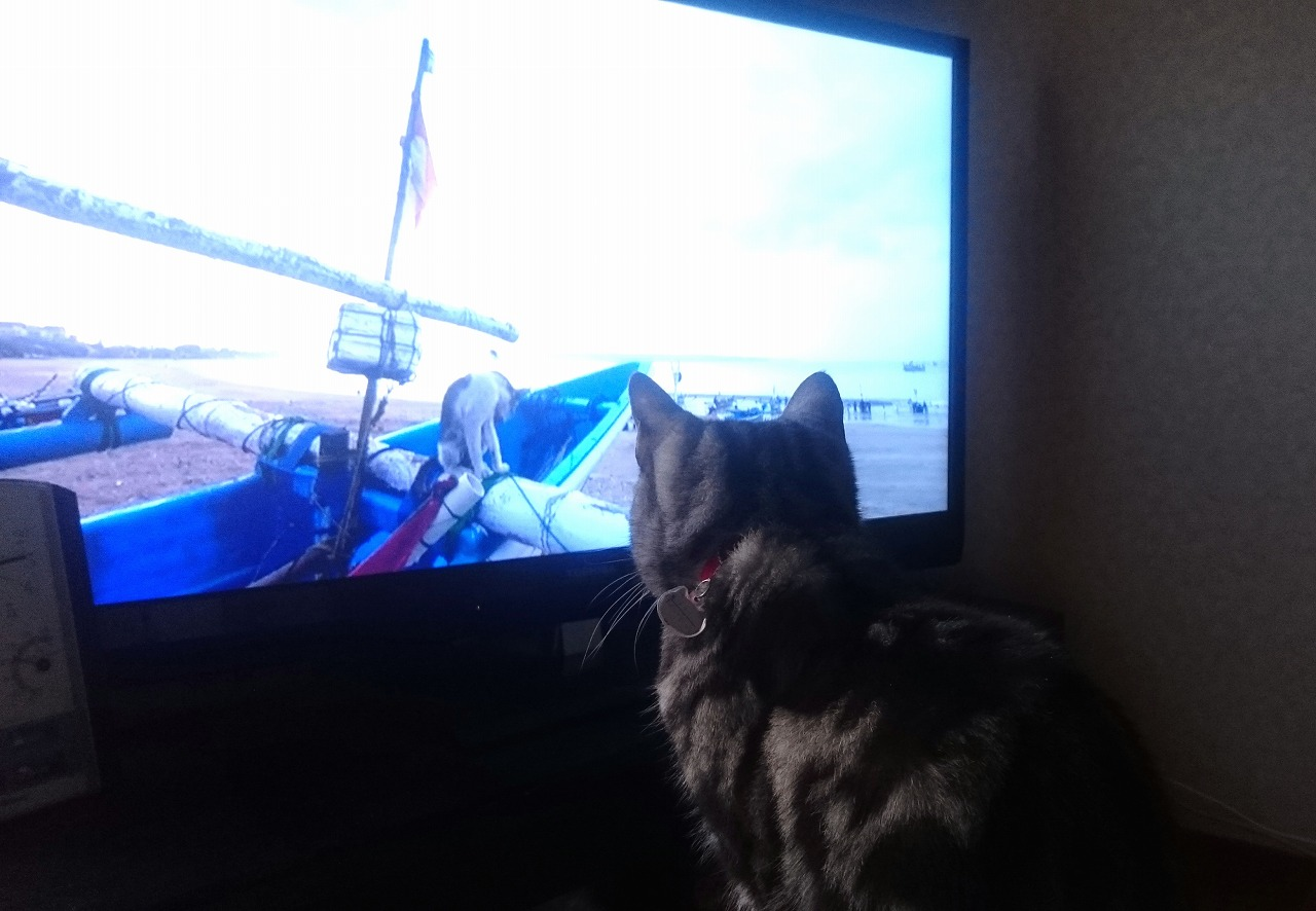 20160220-Ally_Watching_TvProgram_NekoAruki-01.jpg