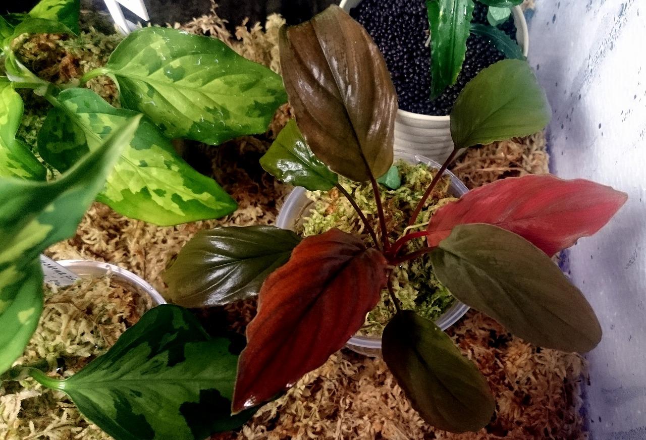20160305-Plants-X07.jpg