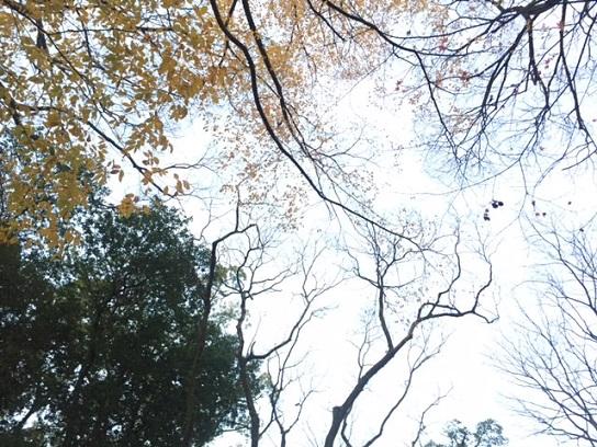 初冬の樹木