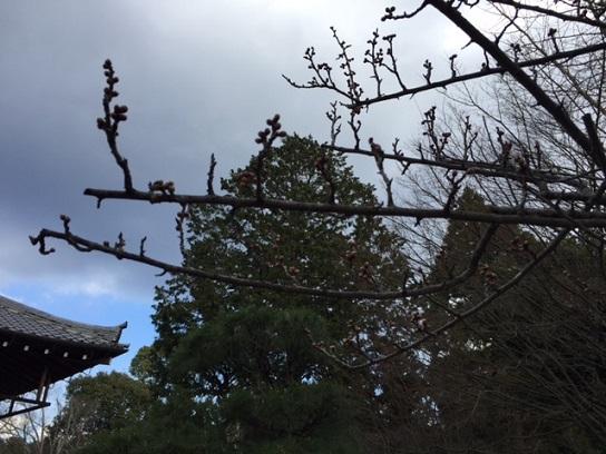 梅のつぼみと空