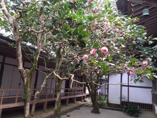 三銘椿の庭