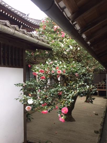 三銘椿の庭1