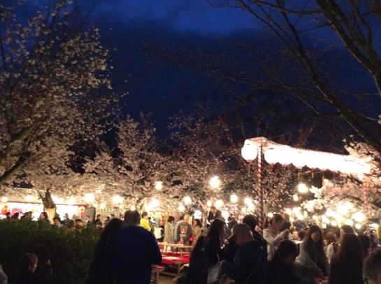 円山公園夜桜見物客