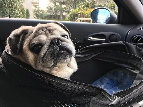 車で待たされてたチッチ