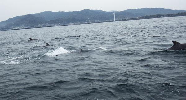 イルカ ウオッチング1