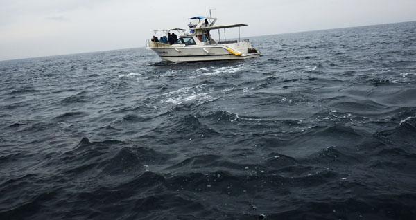 イルカ・ウオッチング 舟