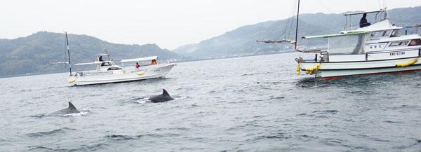 イルカ ウオッチング 3