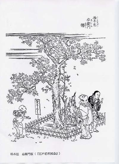江戸名所図会 右衛門桜