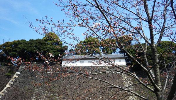 富士見多聞と桜
