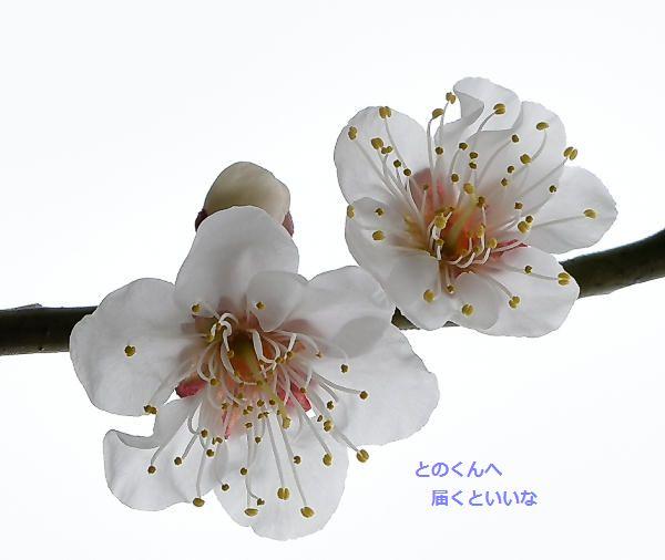 for miyuki and tono