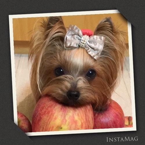 りんご~2