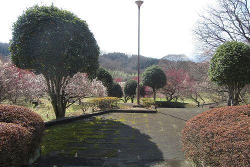 いこいの村の庭