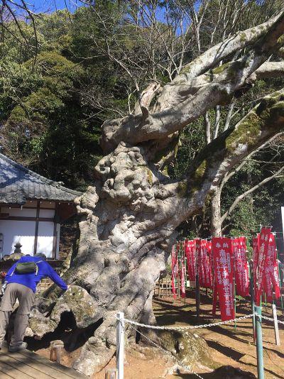 益山寺の大楓