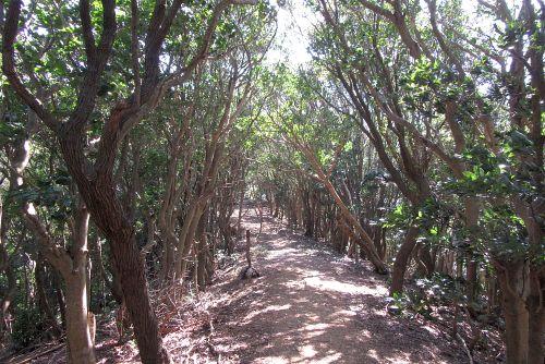 ウバメガシ林