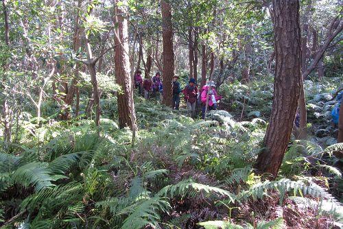 シダが生い茂る森