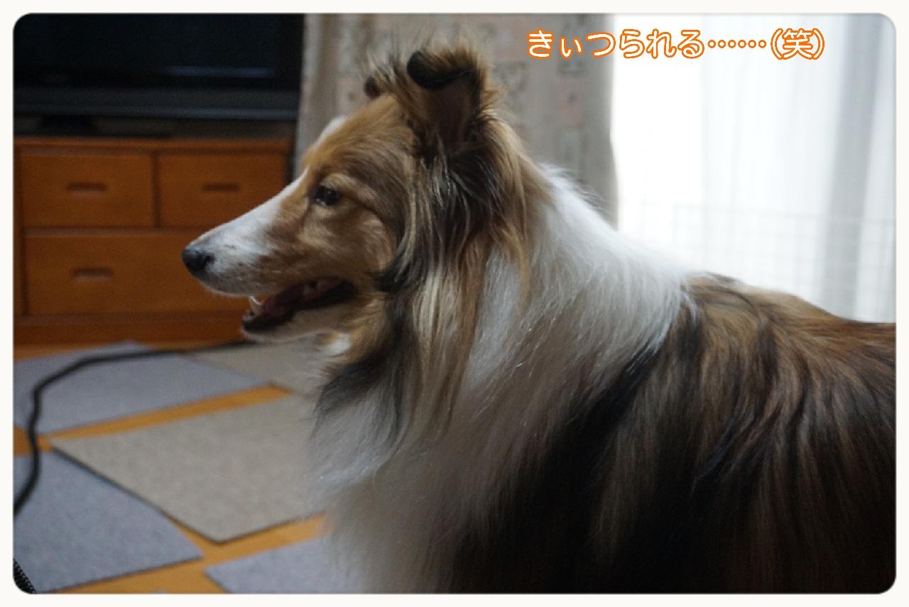 16-03-09-15-06-44-787_deco.jpg