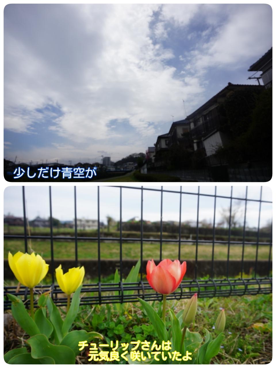 16-04-04-15-37-08-685_deco.jpg