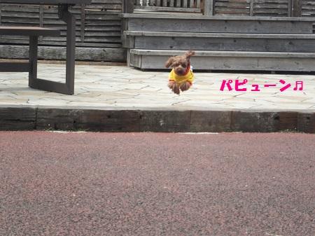 パピュ-ン(^^♪