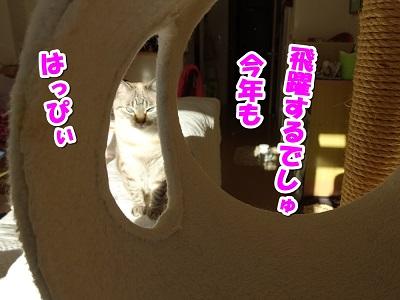 DSC00297.jpg