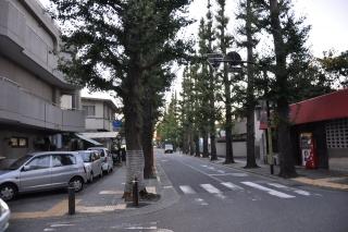 成城散策 桜並木