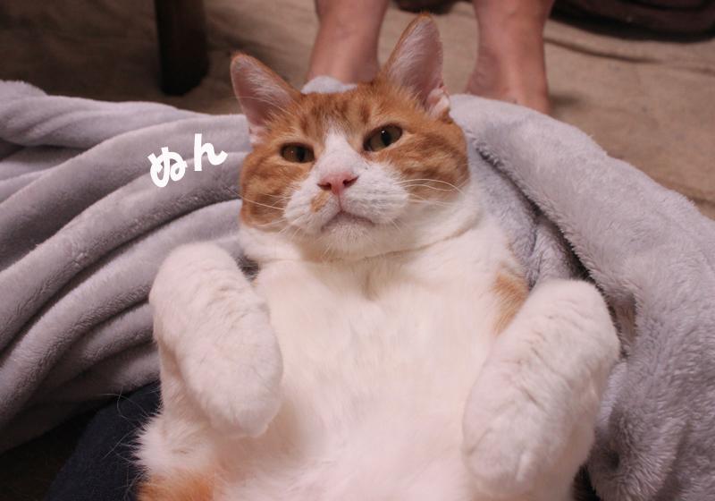 nekoyamada20151224_8.jpg