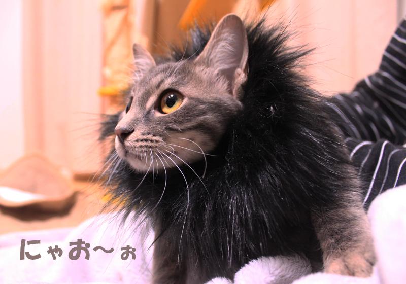 nekoyamada20151227_2.jpg