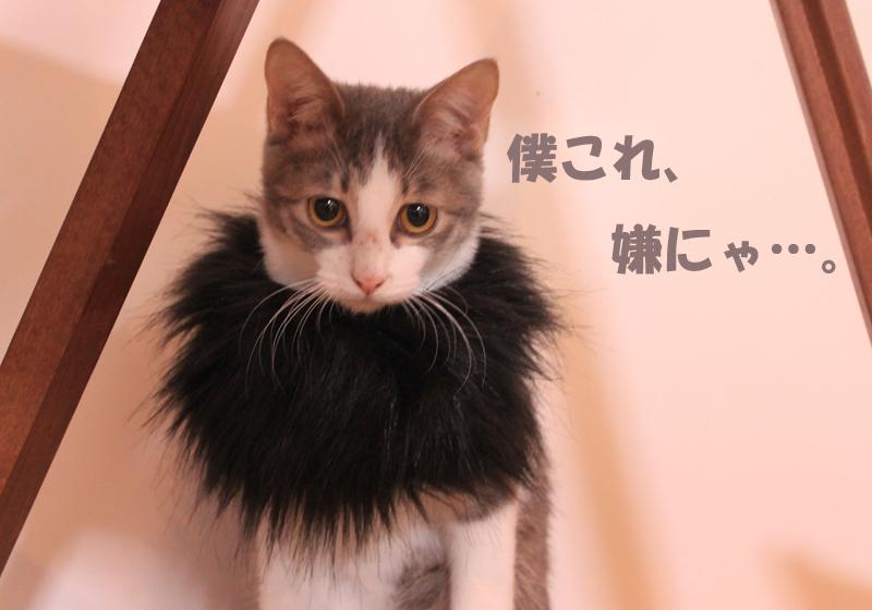 nekoyamada20151227_4.jpg
