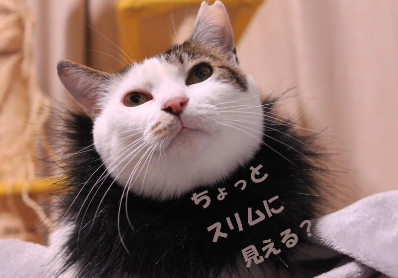 nekoyamada20151227_6.jpg