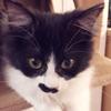 pocchimo_p1_top1.jpg