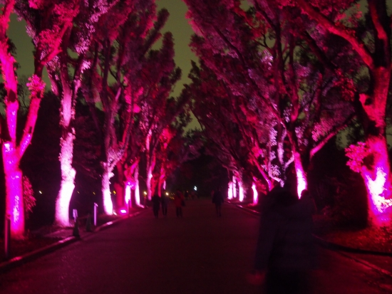 151221府立植物園クリスマス⑫