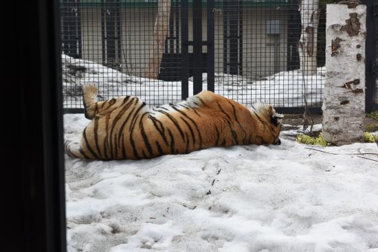 Zoo 2016/3/29 2
